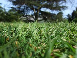 Grass, Royal Botanic Gardens